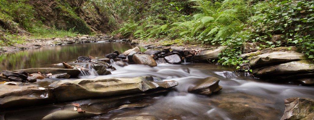 Environ - creek