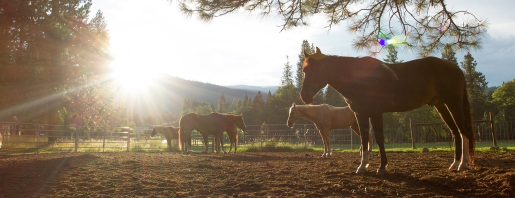 Ranch Camp 14 - horse sunburst