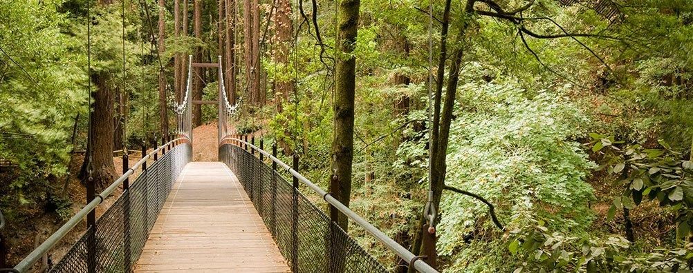 Environment - bridge