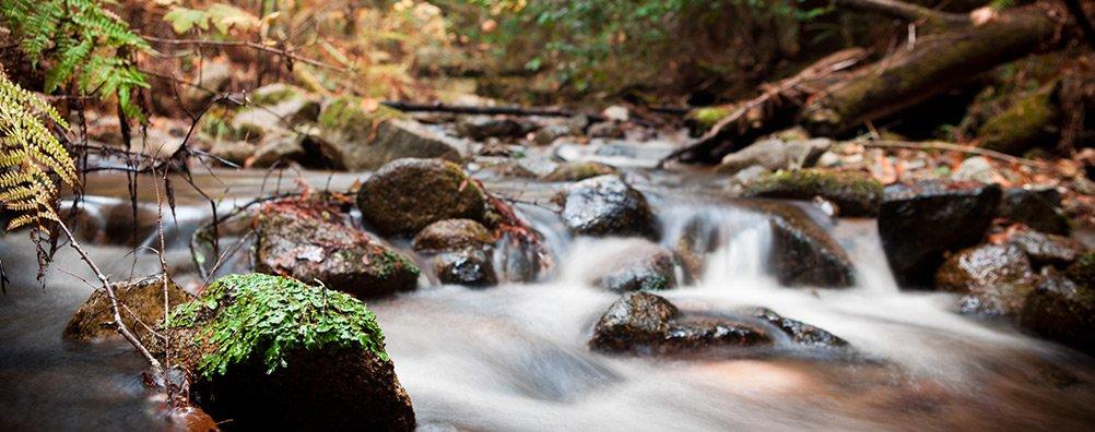 Environment-Creek