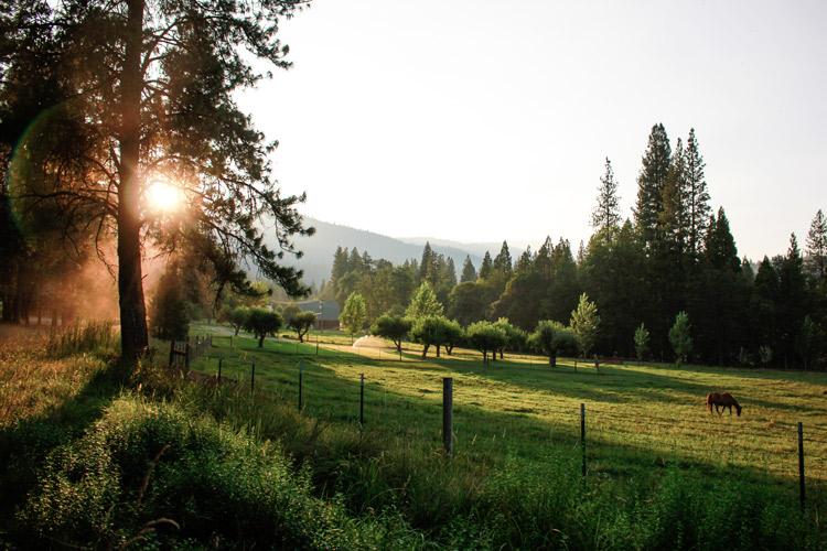 Kidder Creek Pasture